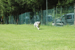 Giughem2011-8